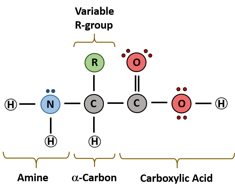 Chapter 2: Protein Structure - Chemistry