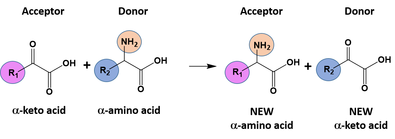 CH103 – Chapter 7: Chemical Reactions in Biological Systems