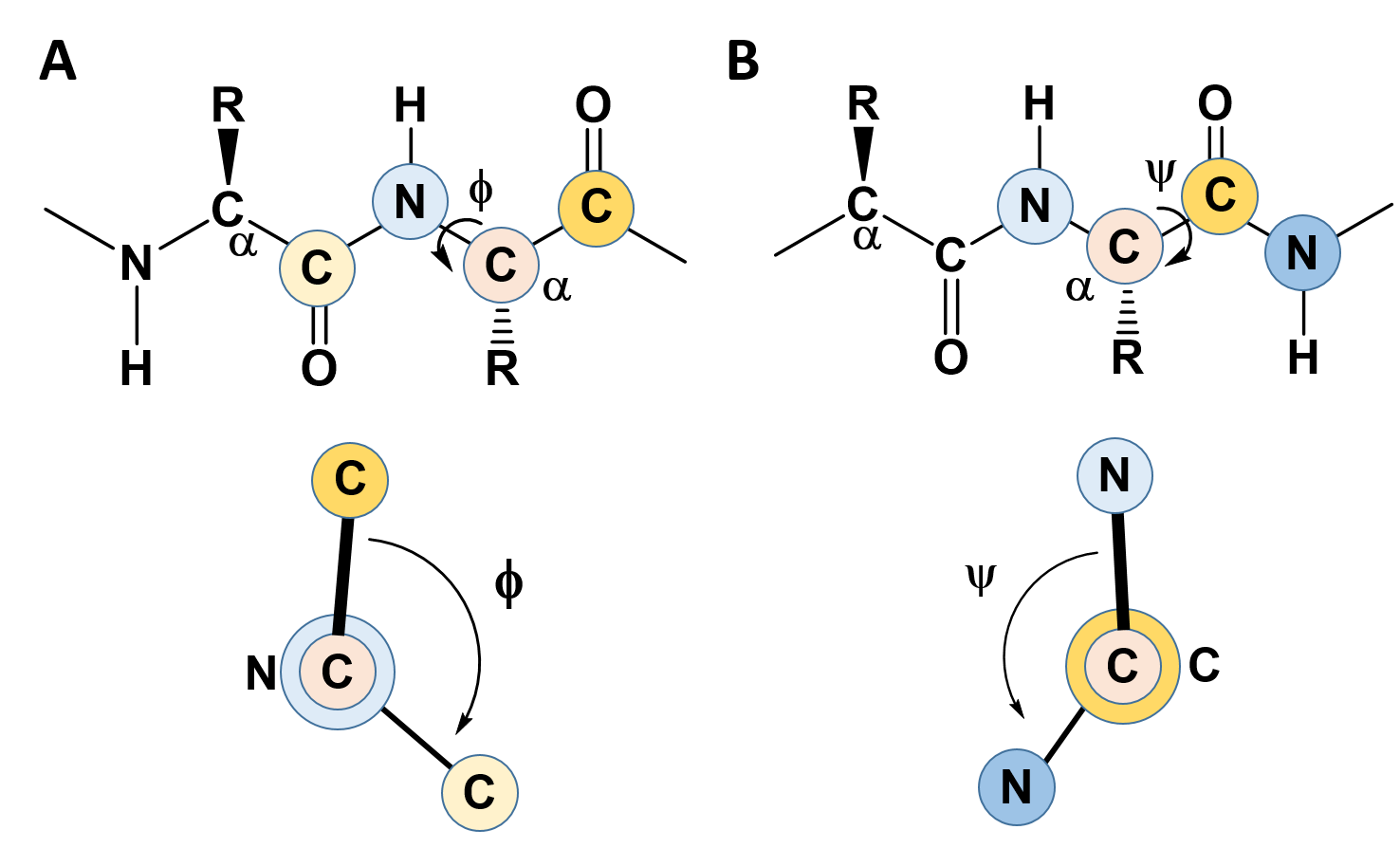 Chapter 2: Protein Structure – Chemistry