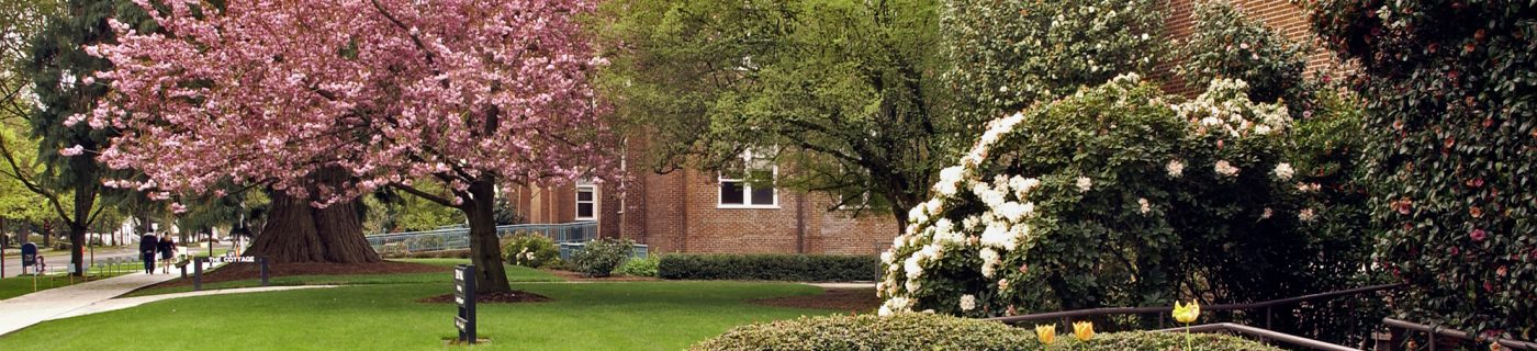 entrance to Todd Hall with blooming trees and shrubs in foreground
