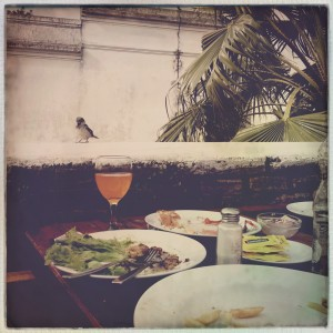 We got to eat lunch with the birds. One of the most relaxing lunches I've ever had.