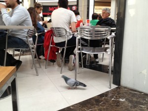 Pigeon in the food court