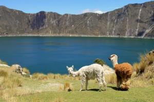 llama-watch